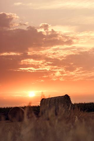 "Photo ""Summer"" - by fotografieloft"