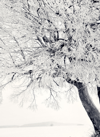 Photo Frozen Tree, fotografieloft